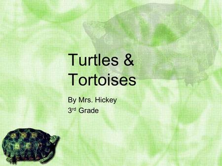 Turtles & Tortoises By Mrs. Hickey 3 rd Grade Turtle & Tortoise Fun Facts Turtles have been on the earth for more than 200 million years. The earliest.