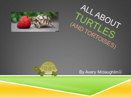 ALL ABOUT TURTLES (AND TORTOISES) By Avery Mclaughlin.