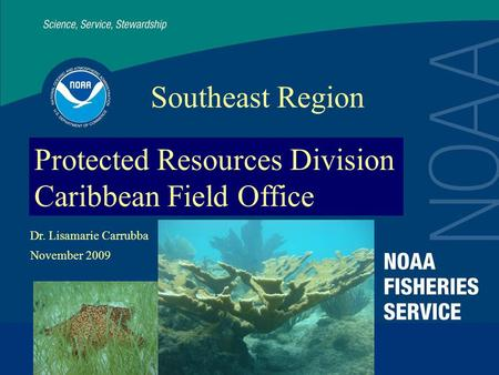 Protected Resources Division Caribbean Field Office Southeast Region Dr. Lisamarie Carrubba November 2009.