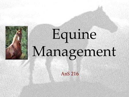 Equine Management AnS 216. Basic requirements of a horse  Food  Water  Shelter  Health care  Hoof care  Exercise.