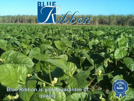 BRNQ is part of the Blue Ribbon Group who has been active in the Burdekin since 2007. Blue Ribbon was founded in 2000 and has now developed into one of.