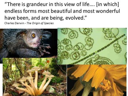 """There is grandeur in this view of life…. [in which] endless forms most beautiful and most wonderful have been, and are being, evolved."" Charles Darwin."