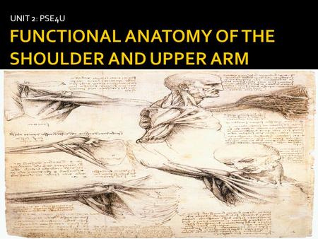 UNIT 2: PSE4U.  Identify and discuss the role of each of the following components of the shoulder  Bony anatomy  Joint articulations  Static stabilizers.