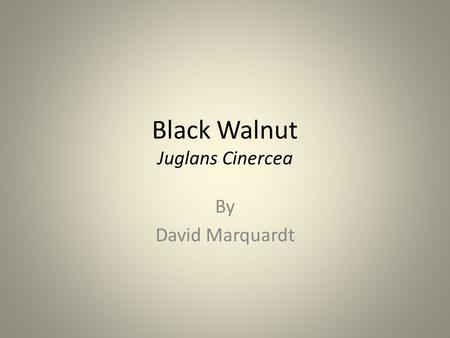 Black Walnut Juglans Cinercea By David Marquardt.