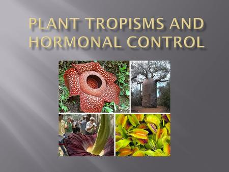  Plants depend on their immediate environment for the materials and energy they require for survival.  Plants are relatively tolerant of environmental.