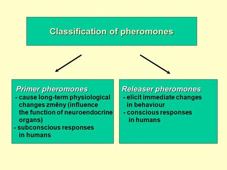 Classification of pheromones Primer pheromones - cause long-term physiological changes změny (influence the function of neuroendocrine organs) - subconscious.