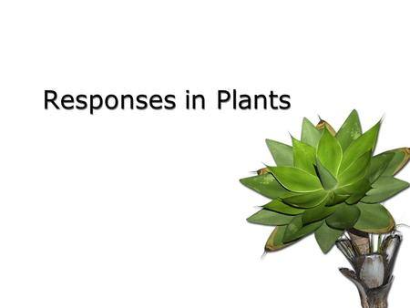 Responses in Plants.