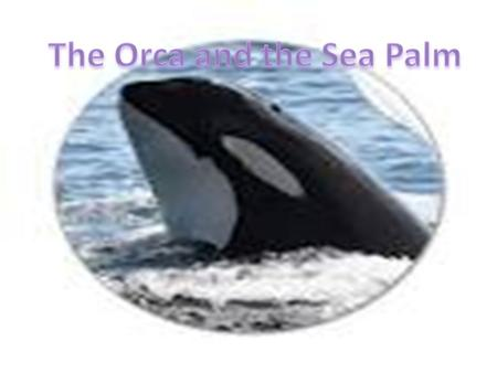 The Orcas common and scientific name The Common name for the Orca is Killer whale or Orca The scientific name is Orcinus orca.