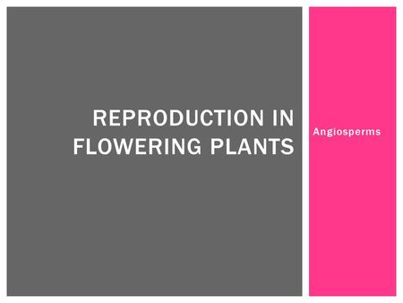 Angiosperms REPRODUCTION IN FLOWERING PLANTS.  The gametophytes of flowering plants only consist of a few cells and are totally dependent on the sporophyte.