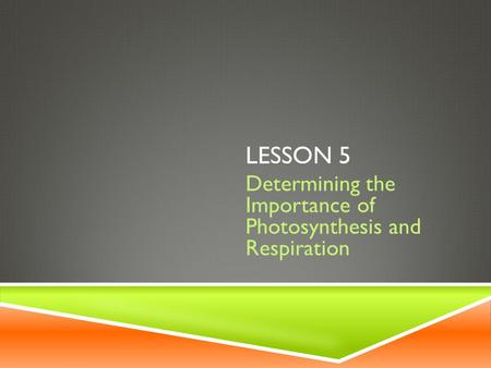 Determining the Importance of Photosynthesis and Respiration