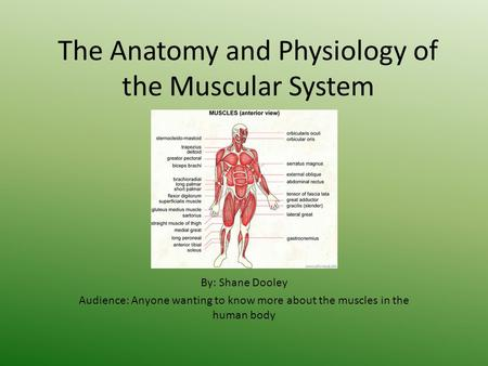 The Anatomy and Physiology of the Muscular System By: Shane Dooley Audience: Anyone wanting to know more about the muscles in the human body.