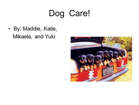 Dog Care! By: Maddie, Katie, Mikaela, and Yuki. Finding the right dog! If you like dogs that are jumpy and playful you should pick the dog that is always.