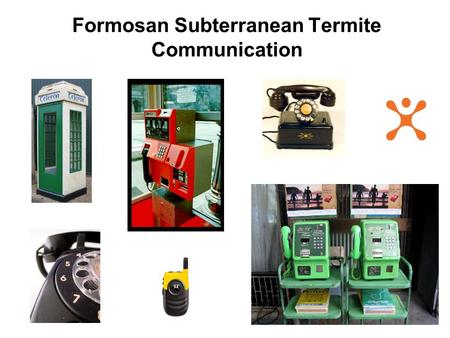 Formosan Subterranean Termite Communication