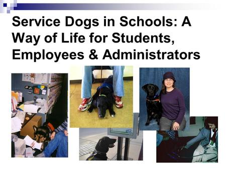 Service Dogs in Schools: A Way of Life for Students, Employees & Administrators.