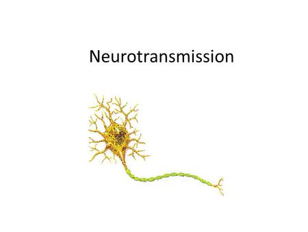 Neurotransmission. Using one or more examples, explain effects of neurotransmission on human behavior.