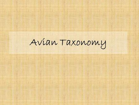 Avian Taxonomy. What is Taxonomy? Webster's Dictionary defines taxonomy as the classification of plants and animals into established groups or categories.