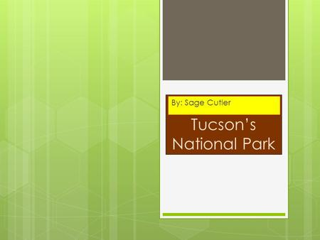 Tucson's National Park By: Sage Cutler. Tucson & Saguaro National Park!