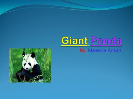 By: Maleeha Ansari. Food Giant Pandas are very good eaters. They can eat 30 to 40 pounds of bamboo a day! Giant pandas eat two kinds of bamboo that are.