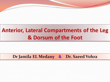 Anterior, Lateral Compartments of the Leg & Dorsum of the Foot Dr Jamila EL Medany & Dr. Saeed Vohra.