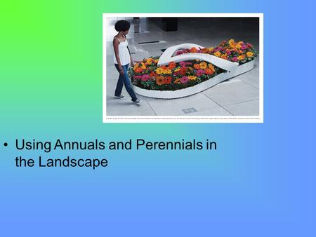 Using Annuals and Perennials in the Landscape. Next Generation Science / Common Core Standards Addressed! CCSS. Math. Content.HSN ‐ Q.A.1 Use units as.