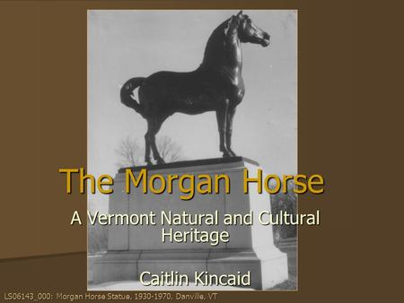 The Morgan Horse A Vermont Natural and Cultural Heritage Caitlin Kincaid LS06143_000: Morgan Horse Statue, 1930-1970, Danville, VT.