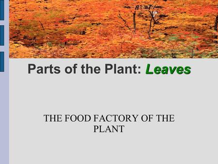 Leaves Parts of the Plant: Leaves THE FOOD FACTORY OF THE PLANT.
