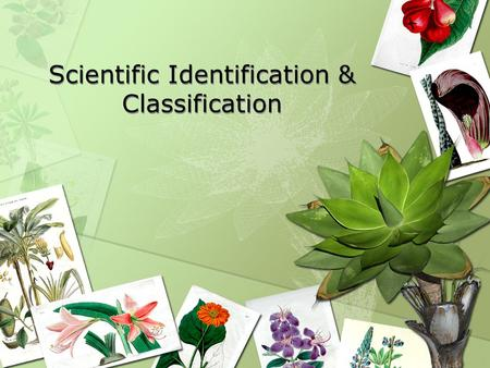 Scientific Identification & Classification. Plant Parts Leaves Stems Roots Flowers.