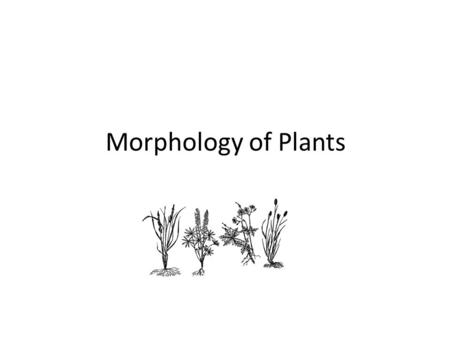 Morphology of Plants. Objectives Define plant morphology Describe characteristics of the leaves, stems, roots, and flowers of range plants Describe the.