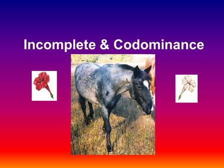 Incomplete & Codominance. Complete dominance The traits studied in Mendel's pea plants were examples of inheritance (or simple dominance): One allele.