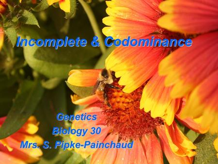 Incomplete & Codominance Genetics Biology 30 Mrs. S. Pipke-Painchaud.