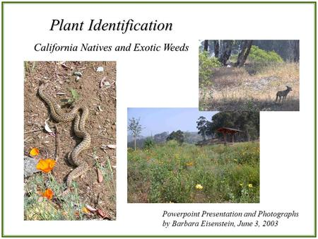 Plant Identification California Natives and Exotic Weeds Powerpoint Presentation and Photographs by Barbara Eisenstein, June 3, 2003.