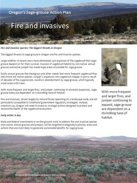 Oregon's Sage-grouse Action Plan Fire and invasives With more frequent and larger fires, and juniper continuing to expand, sage-grouse are dependent on.