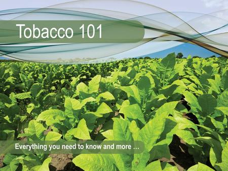 The Cost of Tobacco Use Module 12 Tobacco 101: Module 123 The Cost of Tobacco Use Smoking often leaves a bad smell in clothes, cars or homes. What is.