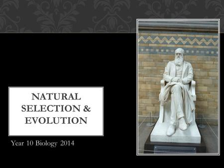 Year 10 Biology 2014 NATURAL SELECTION & EVOLUTION.