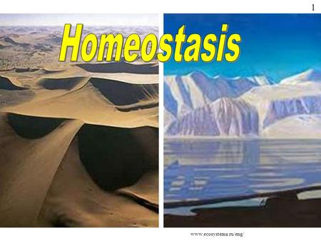 Www.ecosystema.ru/eng/ 1. The term 'homeostasis' is derived from two Greek words; Homeo which means 'unchanging' and Stasis which means 'standing' In.