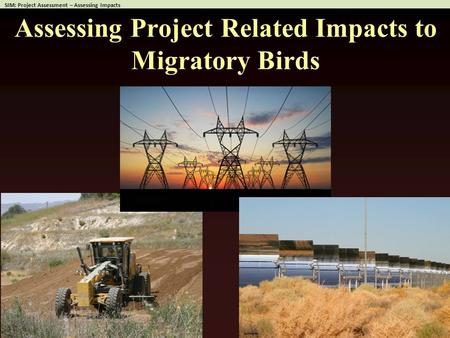 Assessing Project Related Impacts to Migratory Birds.