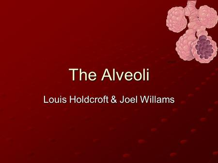 The Alveoli Louis Holdcroft & Joel Willams. Adaptations The lungs Alveoli have many adaptations to make it a lot more effective for efficient gas exchange: