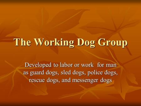 The Working Dog Group Developed to labor or work for man as guard dogs, sled dogs, police dogs, rescue dogs, and messenger dogs.