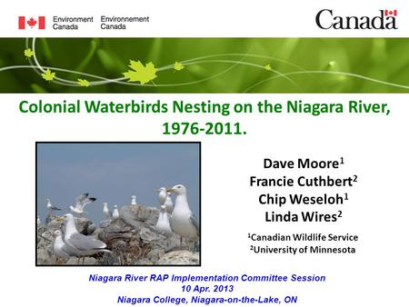 Colonial Waterbirds Nesting on the Niagara River, 1976-2011. Dave Moore 1 Francie Cuthbert 2 Chip Weseloh 1 Linda Wires 2 Niagara River RAP Implementation.