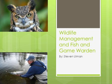 Wildlife Management and Fish and Game Warden By: Steven Ulman.
