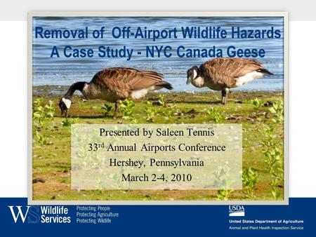 Removal of Off-Airport Wildlife Hazards A Case Study - NYC Canada Geese Presented by Saleen Tennis 33 rd Annual Airports Conference Hershey, Pennsylvania.