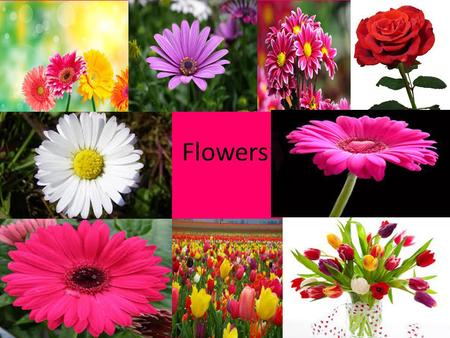 Flowers. How I love flower's I love flowers because their all different colours such as red, pink, blue, green, purple, orange, yellow and white. There.