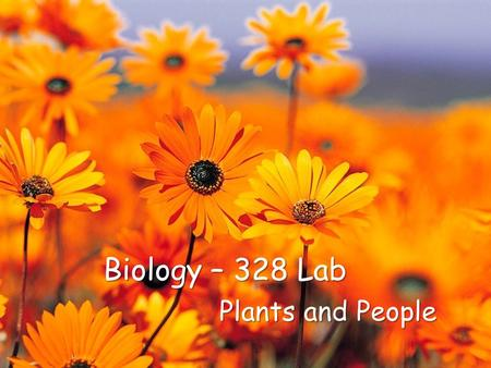 Biology – 328 Lab Plants and People. Objective Understanding origin of flowers, its morphology and anatomy To study flowers based on ◦ Types of pollination.