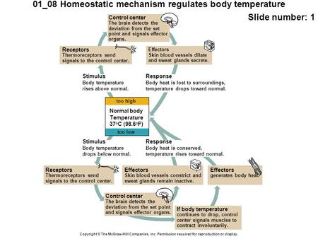 01_08 Homeostatic mechanism regulates body temperature Slide number: 1 Copyright © The McGraw-Hill Companies, Inc. Permission required for reproduction.