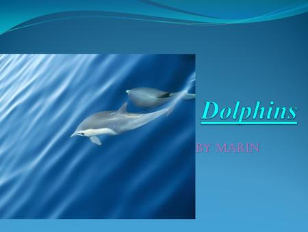 By marin. What does it look like? Dolphins have light skin color. There skin is smooth and slick. A dolphin was a big tale called a flunk. Dolphins look.