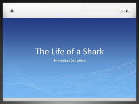 The Life of a Shark By Madison Donenfeld. Sharks Food Sharks eat many different kinds of foods. The foods that sharks eat are, seals,cod, shrimp, sole,