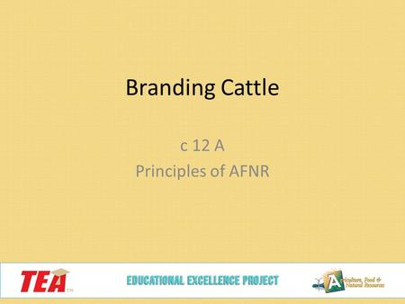 Branding Cattle c 12 A Principles of AFNR. Today we will… Describe the history of branding and how it came about Identify other methods of identification.