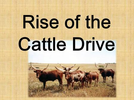 Rise of the Cattle Drive. Background: 1866-1886 When the Spanish settled Mexico and Texas, they brought a tough breed of cattle with them called the Long.