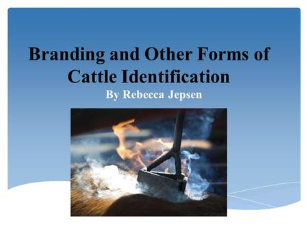 Branding and Other Forms of Cattle Identification By Rebecca Jepsen.