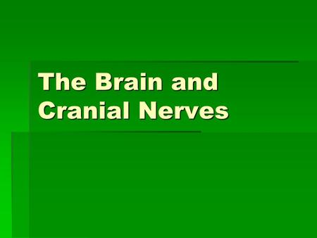The Brain and Cranial Nerves. Major Parts of the Brain 1.Brain stem – continuous with spinal cord  Midbrain  Pons  Medulla Oblongota.